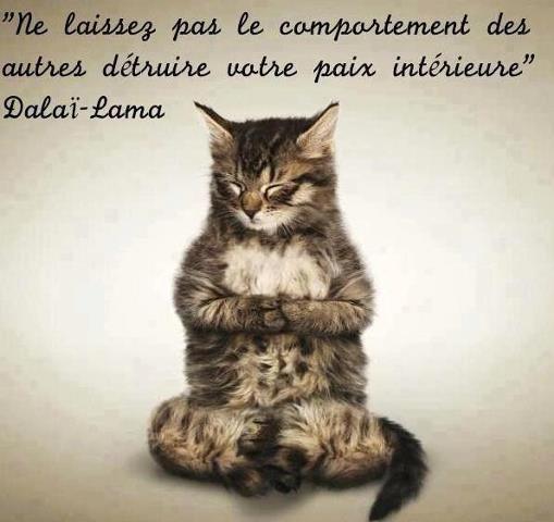 Papier peint drôle de chat zen  chat  nirvana • PIXERS