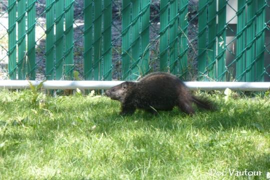 marmotte 2 mod