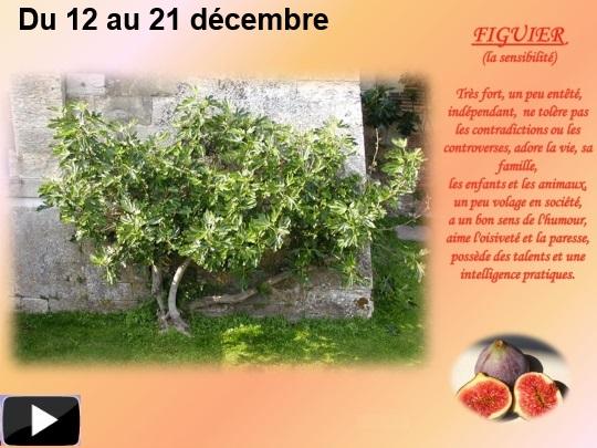 arbres12dec