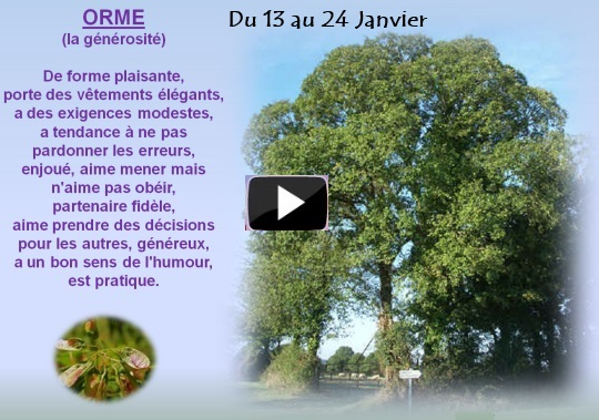 arbre12au24janviers