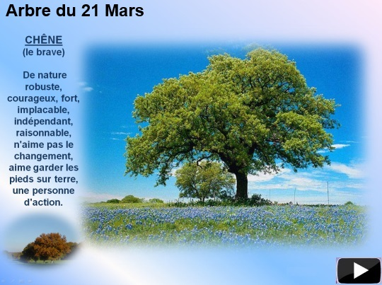 arbre21mars