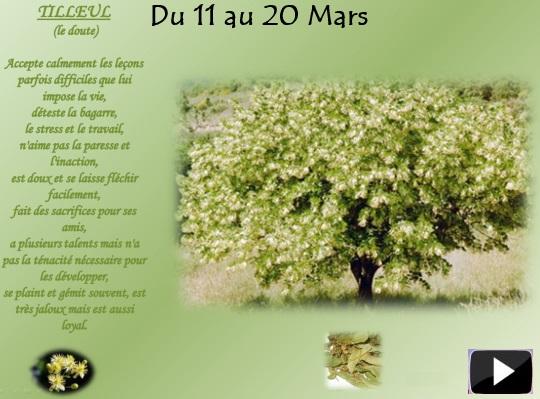 arbretilleulS
