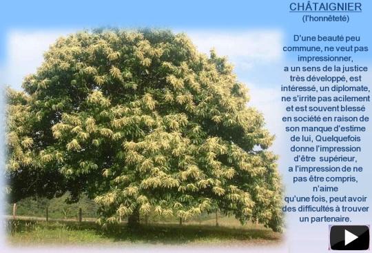 arbre15au24mais