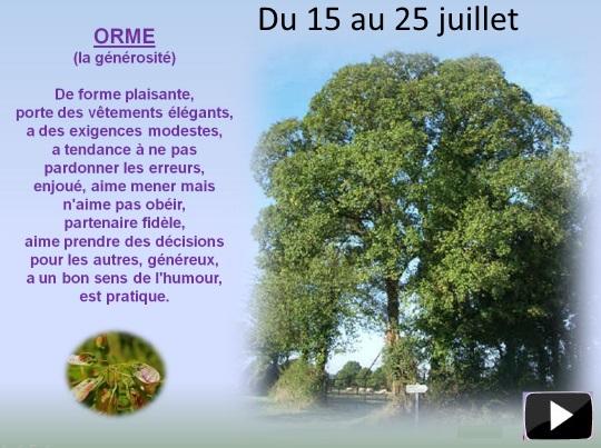 arbre15au25juillets