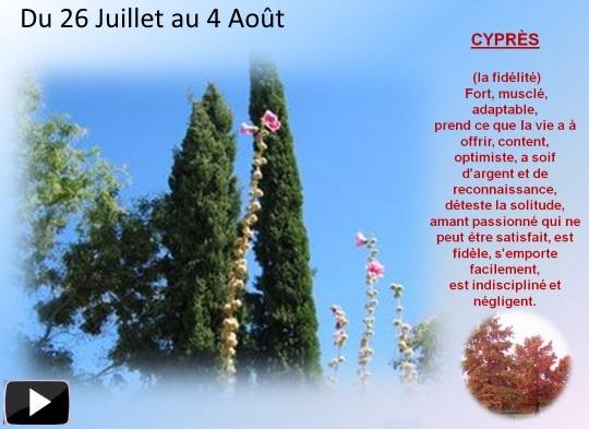 arbre26juil4aouts
