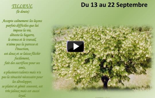 arbre13au22septembreS