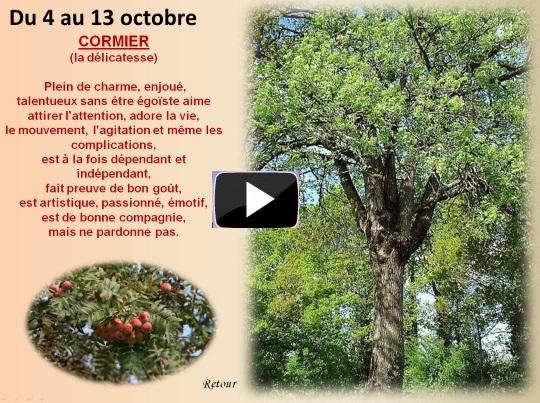 arbre4au13octobreS
