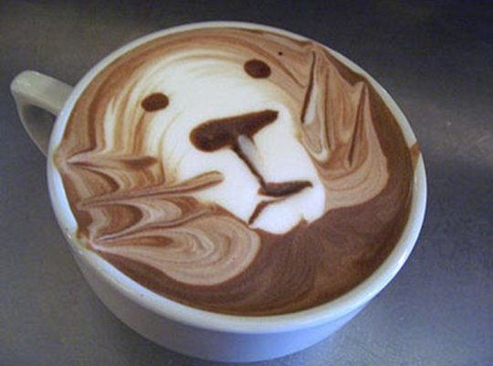 cafe339
